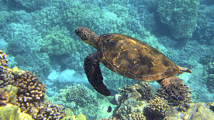 hawaii_pasaport_vaccin_poza_reprezentativa_turtle
