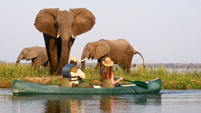 safari_african_in_zambia_poza_reprezentativa